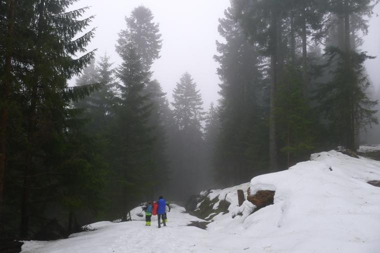 Wald im Nebel © Maja Christ