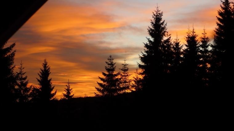 Wald im Morgenrot © Maja Christ