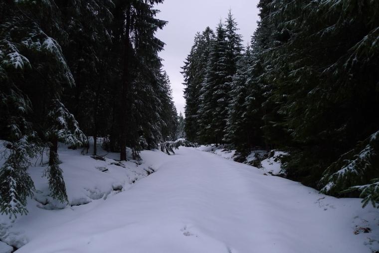 Wald im Schnee © Maja Christ